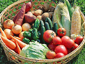 たんぱく質、ミネラル、ビタミンなど体には欠かせない栄養素を 天然素材のみで体内に摂取することが出来る最高級の国産無添加のドッグフードです。        使用する原材料は全て人間が食べることが出来る厳選した食材のみを使用し、 添加物や香料、保存料はもちろん合成のビタミンやミネラルなども添加せず全ての栄養を食材から満たした本当にママの手作りのようなドッグフードです。