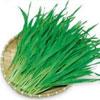 大麦若葉は、ビタミンA・B・Cやカルシウム、カリウムやたんぱく質、食物繊維に葉緑素、マグネシウムやマンガン、亜鉛などが豊富です。高血圧や動脈硬化の予防、改善にも効果的な食材です。食材産地:大分県
