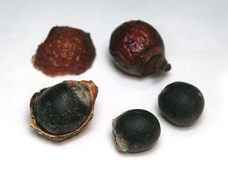 ムクロジの果実はインドやネパールでは、昔から石けんとして洗濯などに使われており、アーユルヴェーダ(インド伝承医学)では、薬草(ハーブ)として重要な役割をはたしてきました。日本でもエコ洗剤としても使われ、抗炎症・抗菌といった効果があります。