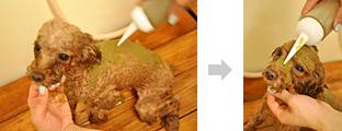 5.目に入らないように体、お顔の順にハーブパックを塗っていきます。(100%オーガニックなのでわんちゃんが舐めてしまっても安心です。)